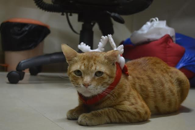 Ginger the cat at Pagalguy office